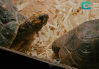 ZooPark. В Смоленске отмечают Всемирный день черепахи
