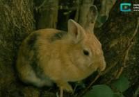 ZooPark. Кролики