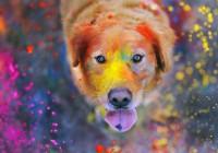 Смоленск раскрасят красками Холи