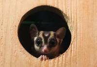 В Смоленском зоопарке отметят День эколога