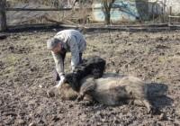 В Смоленской области потерялась собака — герой передачи «Сам себе режиссер»