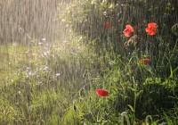 Пасмурная и дождливая погода пришла в Смоленск