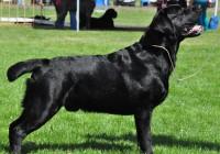 В Смоленске прошла международная выставка собак