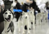 В Смоленске пройдет международная выставка собак