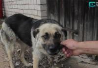 «Гектары собачьего счастья» – репортаж о строительстве приюта для бездомных собак в Смоленском районе.
