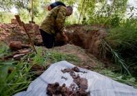 Участники смоленской Вахты памяти нашли останки почти 200 бойцов