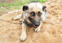 В Смоленске пройдет благотворительная акция в помощь бездомным животным «Не бросай!»