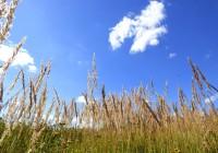 21 августа. Утро в Смоленске: выходные будут солнечными