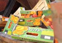 Более 60 тонн санкционных овощей и фруктов уничтожили на Смоленском полигоне ТБО
