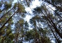 21 сентября. Утро в Смоленске: опасность лесных пожаров в регионе сохраняется