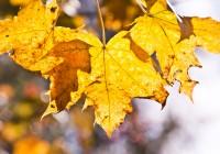 18 сентября. Утро в Смоленске: сегодня будет солнечный и тёплый день