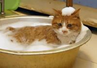 Смолян обвиняют в отсутствии горячей воды
