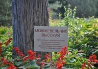 Смоленские деревья назовут по «имени»