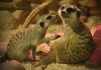 Смоленский зоопарк отметит День защиты животных