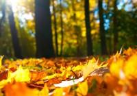На выходных в Смоленске обещают солнце