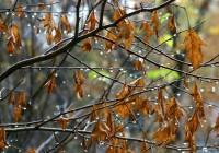 2 октября. Утро в Смоленске: погода не проясняется, Ново-Московская не открывается