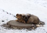 Сегодня в календаре Смоленской «Заботы о животных» День стольника
