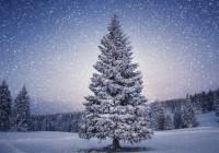 Акция «Рождественское дерево» стартует в Смоленске