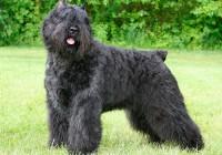 Пёс из Смоленска признан лучшим в стране