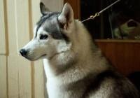 В Смоленске показали лучших собак