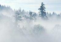 6 ноября. Утро в Смоленске: текстовая он-лайн трансляция