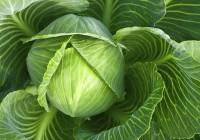 Пять вкусных и полезных рецептов из капусты