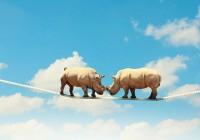 В Смоленске ищут специалистов, умеющих разводить носорогов