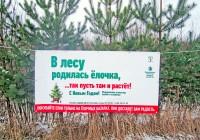 В Смоленске вырубку елей возьмут под особый контроль