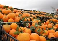 230 тонн овощей и фруктов из Израиля и Турции уничтожены под Смоленском