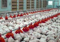 В Смоленской области планируют открыть новую птицеферму