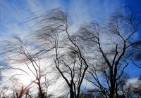 В Смоленской области по-прежнему ветрено