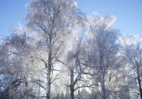 В Смоленск пришло резкое похолодание