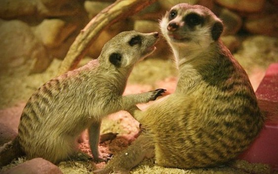 Смоленский зоопарк отмечает 15-летие