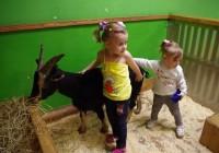В Смоленске открывается ручной зоопарк