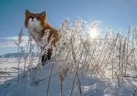 18 февраля. Утро в Смоленске: текстовая трансляция
