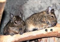 Посетители Смоленского зоопарка переизбрали лучшую пару года