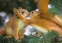 В Смоленском зоопарке выберут самых «влюблённых» обитателей
