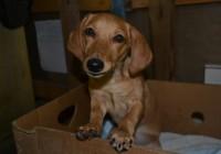 Смоляне подписывают петицию, чтобы наказать смолянку за жестокое обращение с животным