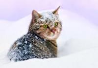 Последний день зимы принесёт в Смоленскую область похолодание и мокрый снег