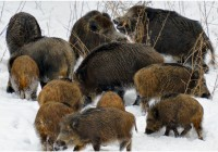 В «Смоленском Поозерье» пересчитали животных