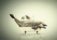В Смоленске планируется акция в защиту дельфинов