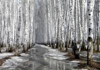 1 марта. Утро в Смоленске: текстовая трансляция