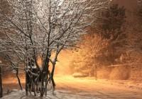 14 марта. Утро в Смоленске: текстовая трансляция
