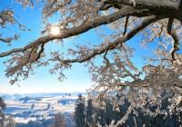 23 марта. Утро в Смоленске: текстовая трансляция