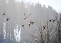 31 марта. Утро в Смоленске