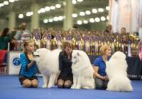 В Смоленске пройдут выставки собак всех пород