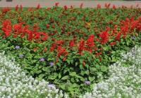 На Смоленские цветы потратят около 3 миллионов рублей