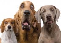 В центре Смоленска проходит вакцинация домашних животных
