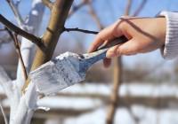 На основных улицах Смоленска вручную побелят деревья