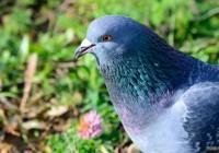 Праздник весны и прилета птиц отметят в Смоленске